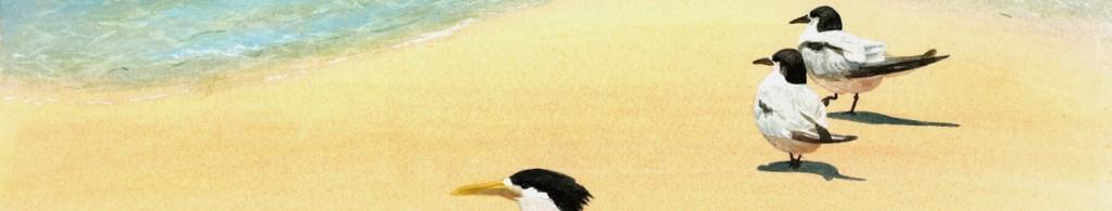 At the shoreline - Fraser Island
